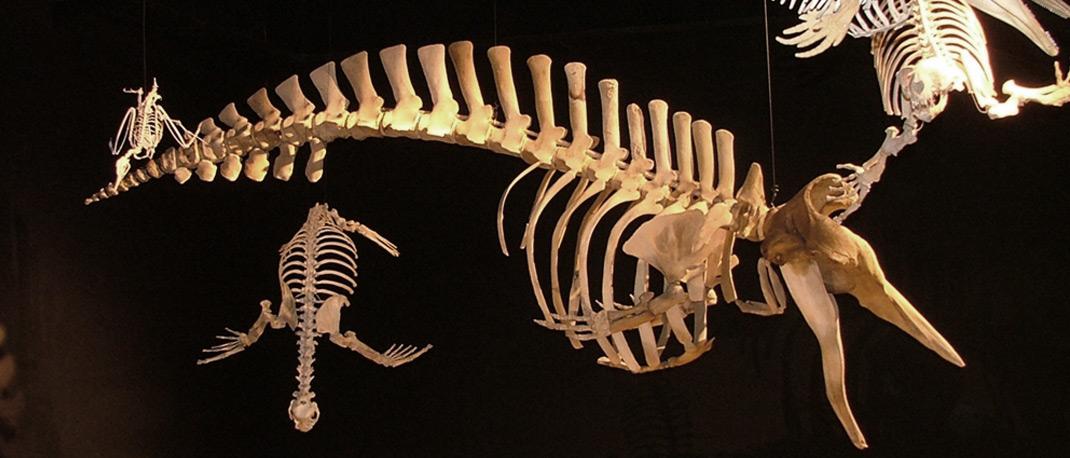 Paleonthology Museum