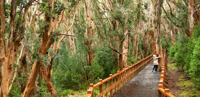 Actividades y excursiones lacustres en Isla Victoria