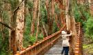 Ilha Victoria e Bosque de Arrayanes